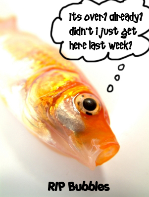 the day my goldfish died Why have my goldfish died after 3 days there are some fish that can be fed every other day but goldfish are not one of them.