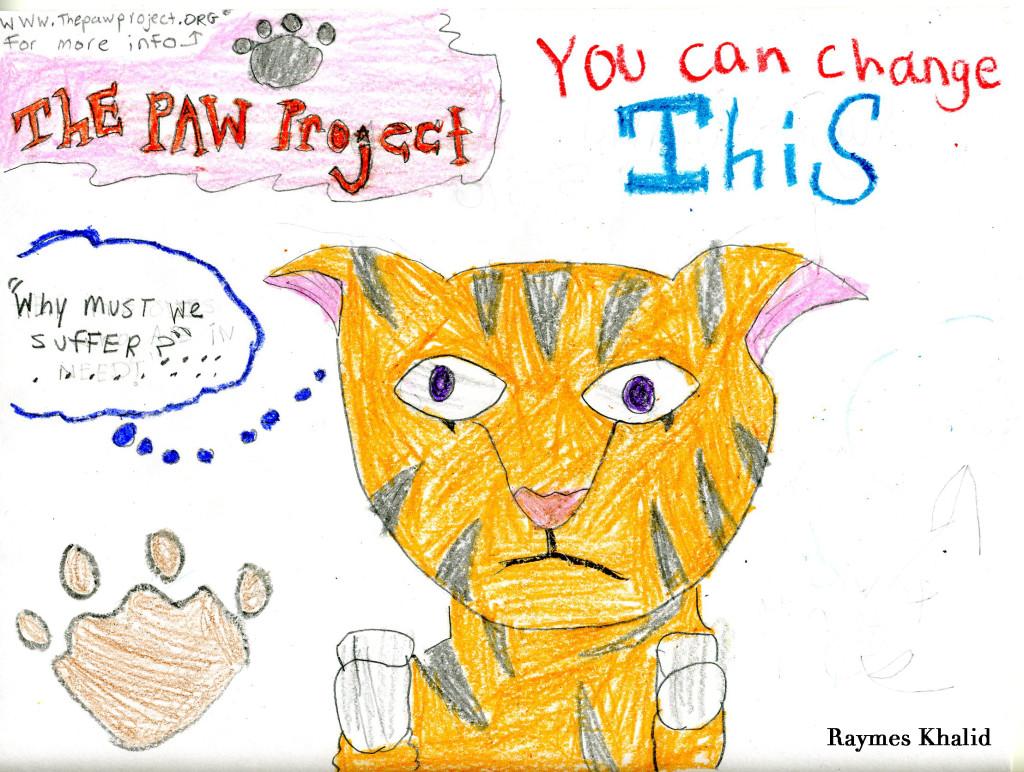 cats-raymes-khalid002